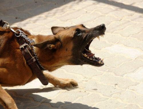 Plädoyer für einen Hundeführerschein
