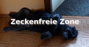 hund-zecken-bekaempfen