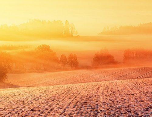 Sonnenwende – die Tage werden wieder länger